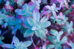 Flores após a chuva imagem de stock