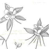 Flores aquilégias dobro Cole??o de flores e de plantas tiradas m?o botany jogo Flores do vintage Rebecca 36 ilustração stock