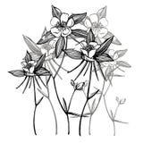 Flores aquilégias dobro Cole??o de flores e de plantas tiradas m?o botany jogo Flores do vintage Rebecca 36 ilustração do vetor
