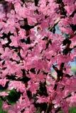 Flores artificiais. Imagens de Stock