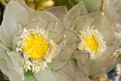 Flores artificiais Imagens de Stock