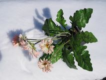 Flores artificiais do gerbera em um potenciômetro na neve branca fotos de stock
