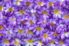 Flores artificiais roxas Fotos de Stock
