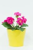 Flores artificiales Imagen de archivo libre de regalías