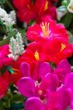 Flores artificiales coloridas del lirio y de la orquídea para la decoración Fotografía de archivo libre de regalías
