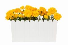 Flores artificiales de la maravilla en el florero plástico blanco aislado Foto de archivo