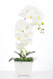 Flores artificiales de la orquídea blanca hechas de tela del plástico va Imagen de archivo
