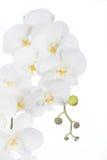 Flores artificiales de las orquídeas blancas del Phalaenopsis hechas de tela y Foto de archivo