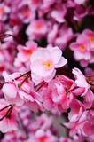 Flores artificiales de Sakura Fotografía de archivo libre de regalías