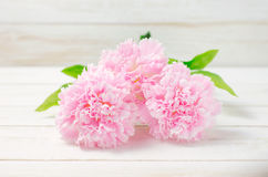 Flores artificiales en colores pastel rosadas del clavel Imagen de archivo libre de regalías