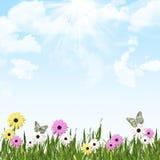 Flores asoleadas del jardín Imagen de archivo libre de regalías