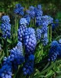 Flores azuis fotos de stock