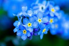 Flores azuis Imagens de Stock Royalty Free