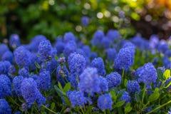 Flores azuis bonitas em um fundo borrado com bokeh Fundo de flores e das hortaliças saturadas na abertura aberta fotografia de stock