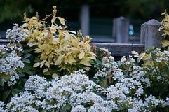 Flores azuis brancas amarelas Imagens de Stock