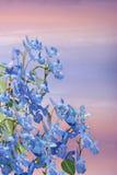 Flores da mola em um fundo bonito. Imagem de Stock Royalty Free