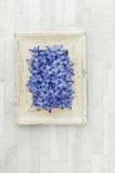 Flores azuis do Hyacinth imagem de stock royalty free
