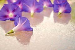 Flores azuis em um vidro molhado Copie o espaço Imagem de Stock Royalty Free