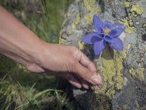 Flores azuis em uma mão das crianças fotos de stock royalty free