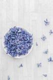 Flores azuis frescas do jacinto que flutuam na água fotografia de stock royalty free