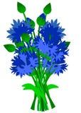 Flores azuis inclinadas da cent?urea isoladas no fundo branco ilustração royalty free