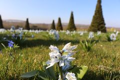 Flores azuis no jardim de Versailles' foto de stock royalty free