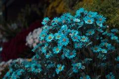 Flores azuis no parque imagem de stock royalty free