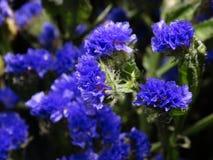 Flores azuis no unfocus imagem de stock