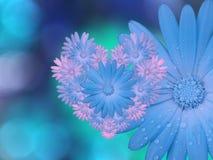 flores Azul-cor-de-rosa, no fundo borrado azul-turquesa closeup Composição floral brilhante, cartão para o feriado colagem o Fotografia de Stock