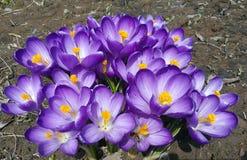 Flores, azul, pistilo, estame, pétala, abelha, verão, plantas, bonito, amarelas, ramalhete Imagens de Stock