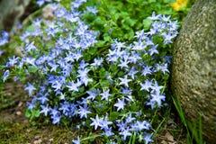 Flores azules Imagenes de archivo