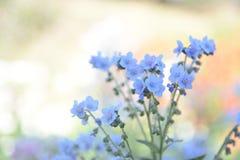 Flores azules borrosas en tono en colores pastel Imagen de archivo libre de regalías