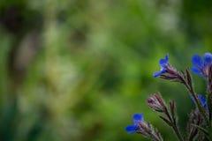 Flores azules con los troncos melenudos Imagen de archivo