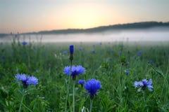 Flores azules contra la salida del sol Imágenes de archivo libres de regalías