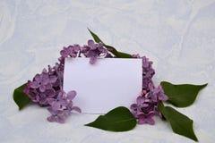 Flores azules de la lila, fondo para el texto Fotos de archivo