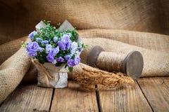Flores azules de Terry de la campánula en el empaquetado de papel Fotografía de archivo libre de regalías