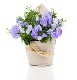 Flores azules de Terry de la campánula en el empaquetado de papel Imagenes de archivo