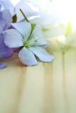 Flores azules del lino Imagenes de archivo