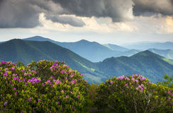 Flores azules del resorte de las montañas apalaches de Ridge Imagen de archivo libre de regalías