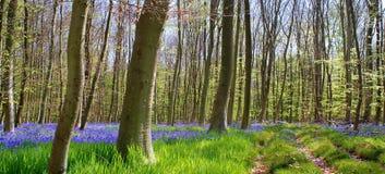 Flores azules en el bosque Fotografía de archivo libre de regalías