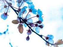 Flores azules en el cielo claro imagenes de archivo