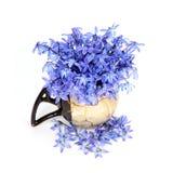 Flores azules en el florero Imagen de archivo libre de regalías