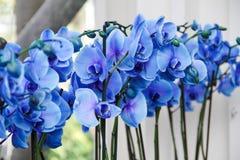 Flores azules en el jardín Foto de archivo libre de regalías