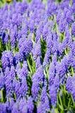 Flores azules en el parque fotos de archivo