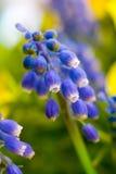 Flores azules en el prado fotos de archivo
