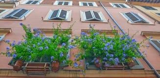 Flores azules en ventanas Fotografía de archivo libre de regalías