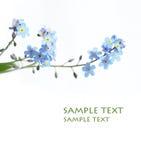 Flores azules encantadoras Foto de archivo libre de regalías