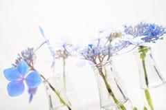 Flores azules frágiles en botellas transparentes de la hierba Imagen de archivo libre de regalías