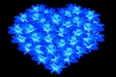 Flores azules hermosas 2 en forma de corazón Imagen de archivo libre de regalías