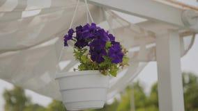 Flores azules hermosas que cuelgan en un pote en el tejado almacen de video